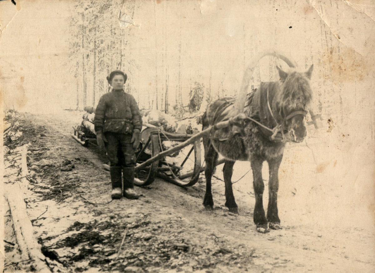 Вывозка леса. 1947 год