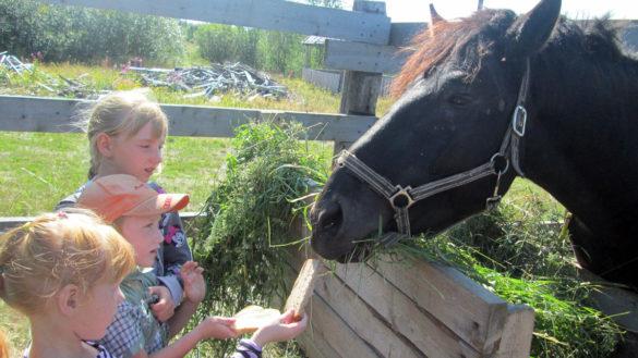 В гостях в конном клубе «Мезенска лошаденка»