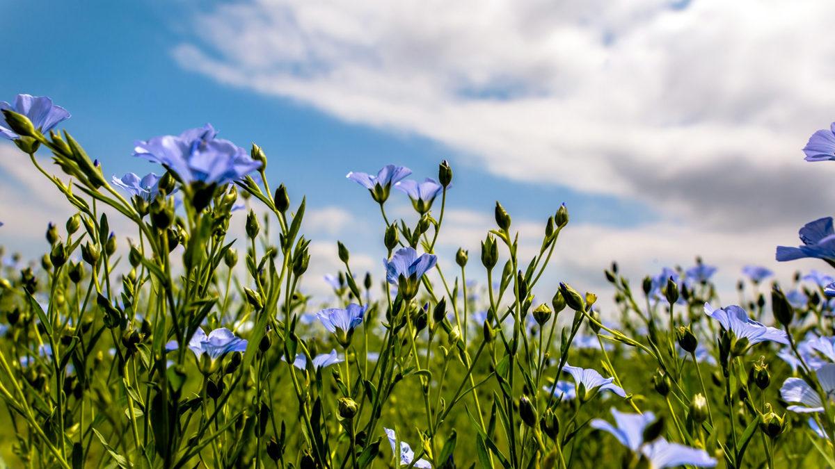 Синий, как летнее небо
