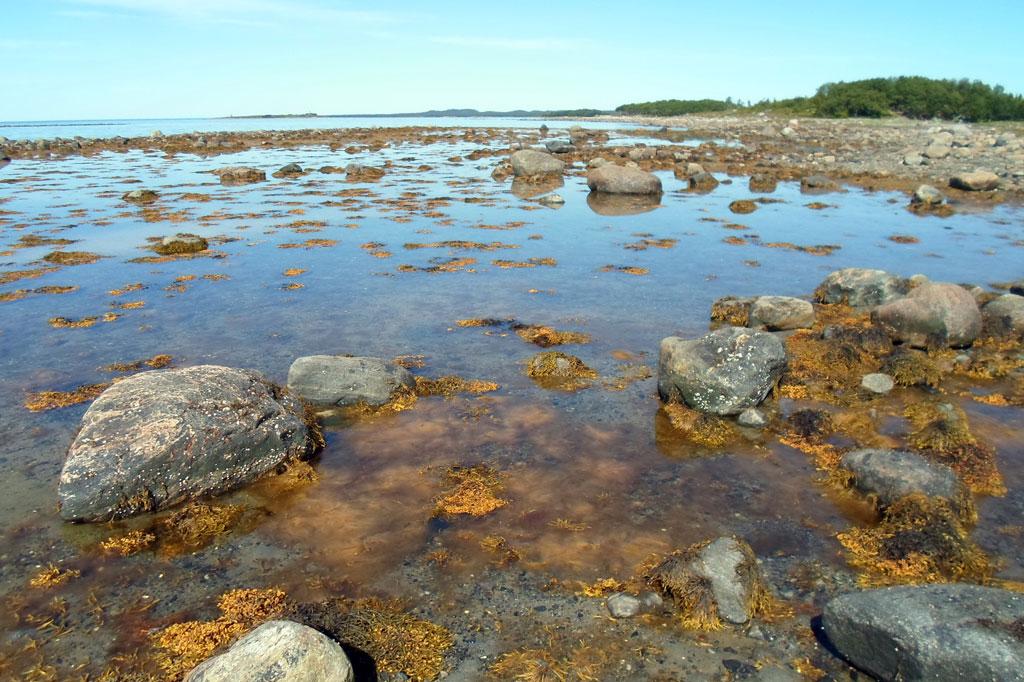 Соловецкое побережье