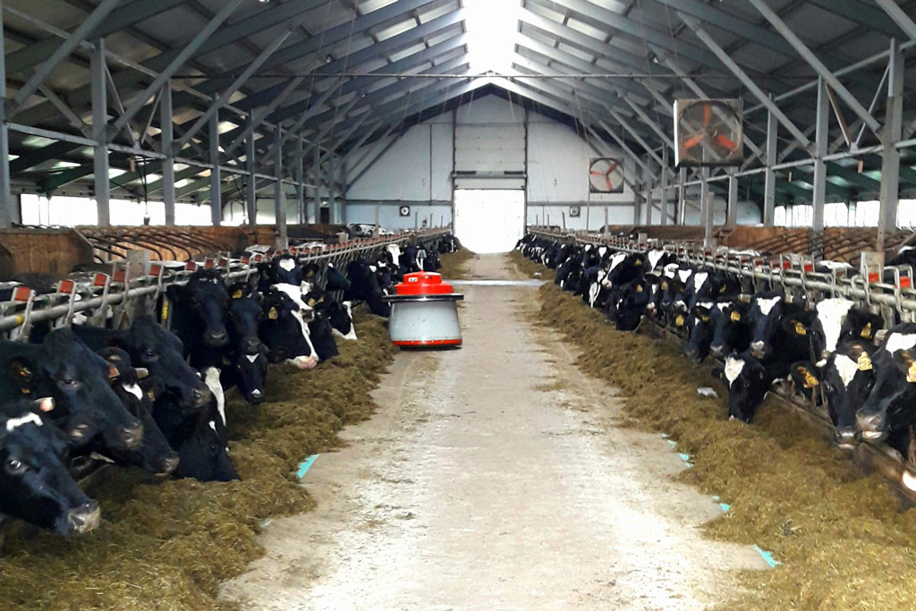 Ферма оборудована автоматическим подталкивателем кормов