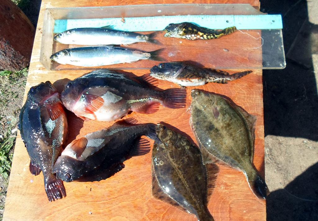 Морская рыба на биоанализ