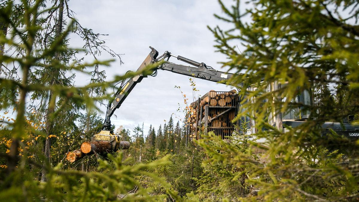 Влесном краю— лесные профессии