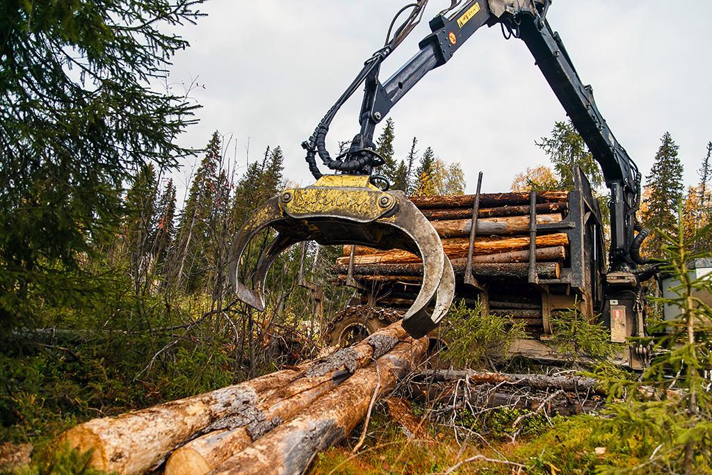Лесозаготовка— основа экономики района
