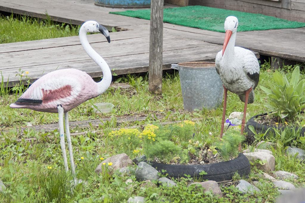 Аист и фламинго