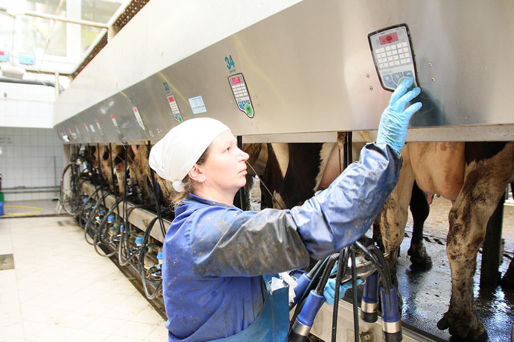Автоматизированная система управления стадом знает все о каждой корове