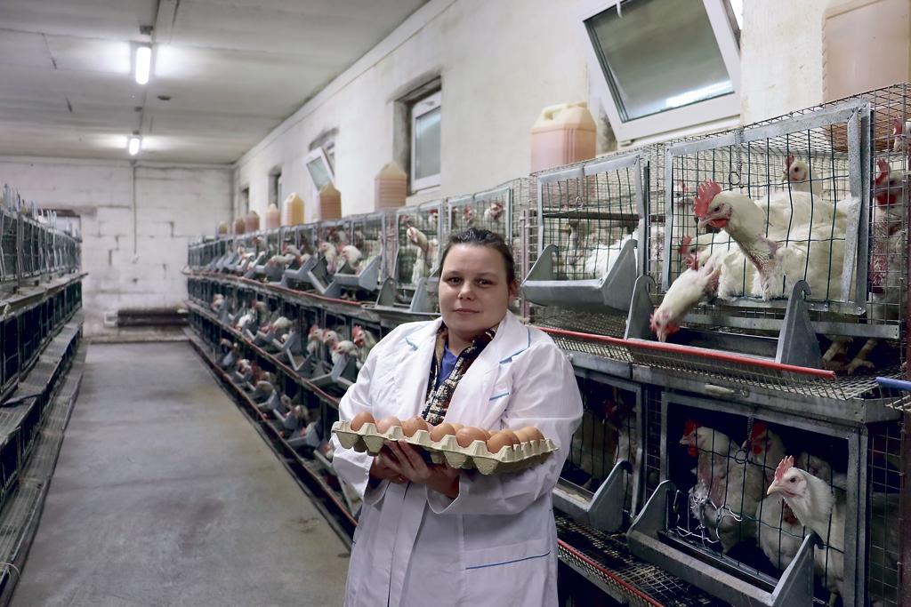 20 тысяч яиц вмесяц— итог работы птицеводов изУльяновской