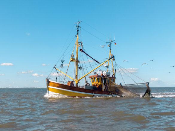 Много лет законопослушные скандинавские рыбари выпутывали клешни из сетей, ругались громко в нашу сторону и бросали «чужих» обратно в воду