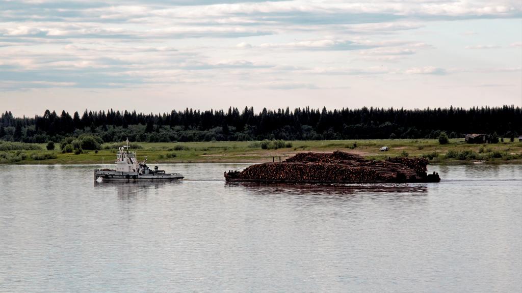 Лес из Виноградовского района теперь сплавляютпореке