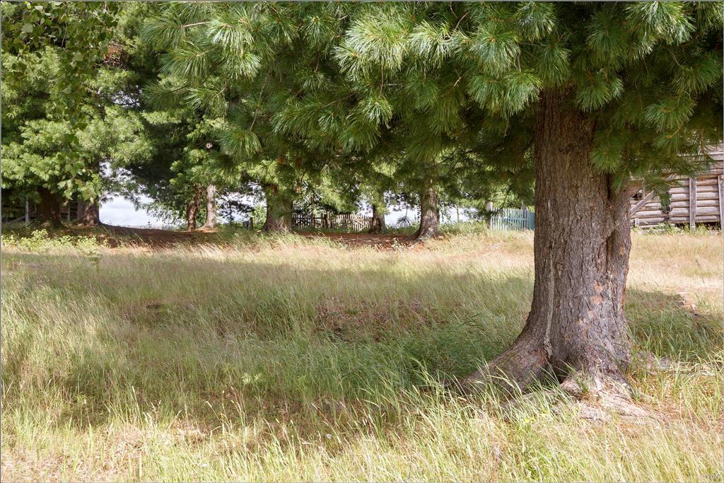 Хрупкие ростки стали могучими деревьями